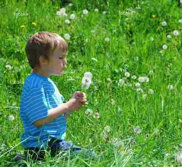 fotolia_7717219-1boy dandelionscrop
